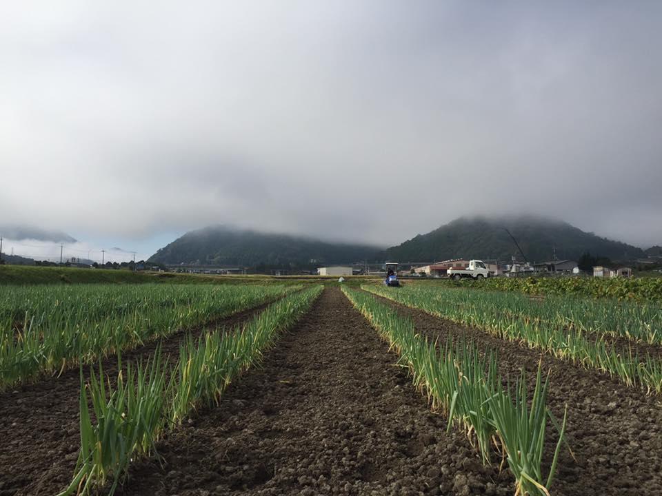 和田山の雲海です。雲海に隠れている山が竹田城址のある虎臥山(とらふすやま)です。