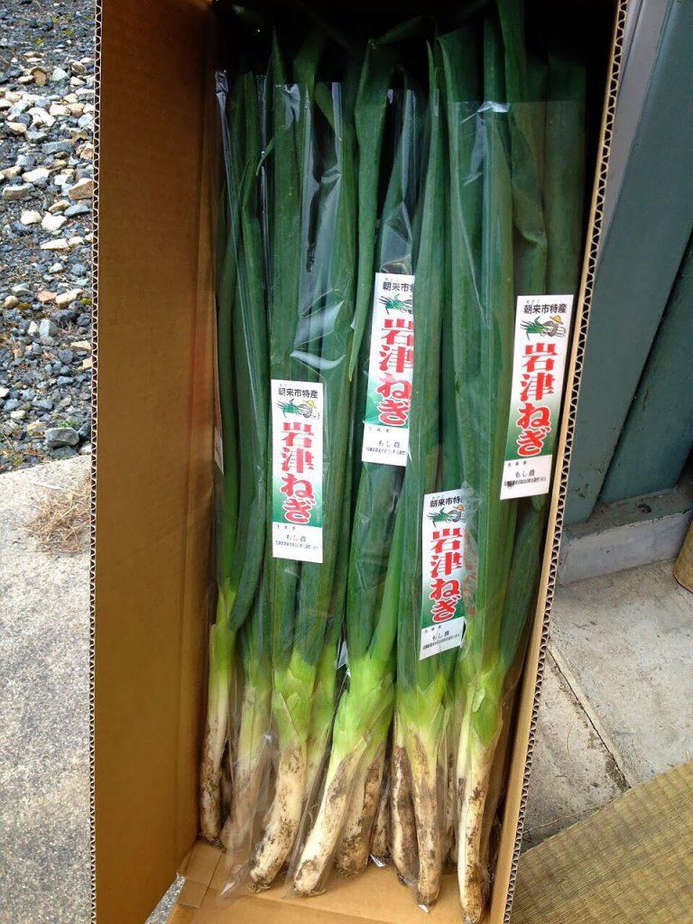 岩津ねぎの全長は約80センチ以上。梱包は専用の箱を使います