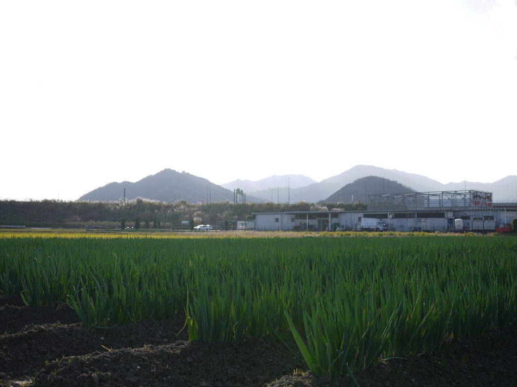 12月の和田山農園「チャッキーファーム」の風景。ひさしぶりに朝から晴れました。