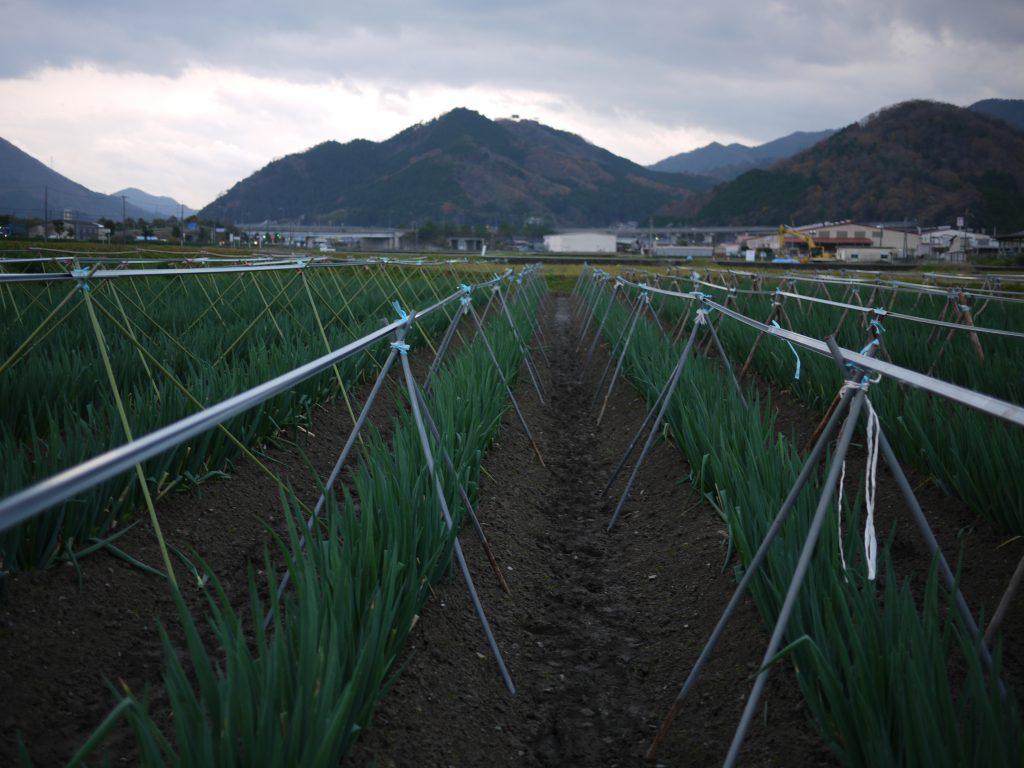 NOUENでは他の生産者の圃場のネット設営も、できる限りお手伝いさせていただいています。