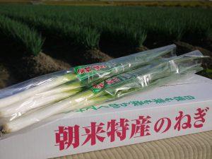 岩津ねぎは兵庫県朝来市岩津ねぎ生産組合の登録商標です。